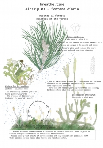 Airship03-Plants-by-Breathe-Earth-Collective-web